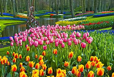 Tulips (Tulipa), park, Keukenhof Gardens, Holland, the Netherlands, Europe