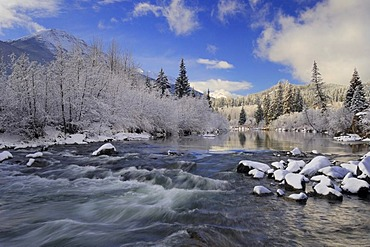 Fresh overnight snowfall blanketing the landscape, Miette River just west of Jasper townsite, Jasper National Park, Alberta, Canada