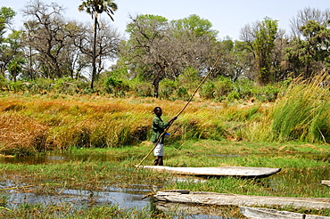 Local man in a Mokoro canoe, Okavango-Delta, Botswana