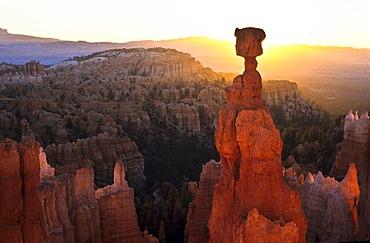 Thors Hammer, Bryce Canyon Nationalpark, Utah, United States of America, USA