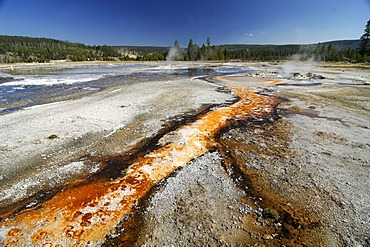 Layers with thermophilic bacteria, Upper Geyser Basin, Yellowstone Nationalpark, Wyoming, USA, United States of America