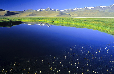 Lake Kar Tso, grassy plateau and snow-covered peaks, elevation of over 4900 metres, Himalayas, Ladakh, India