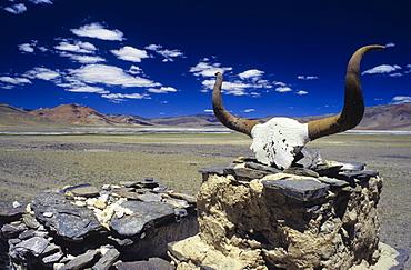 Mani inscriptions on a yak skull, Himalayas, Ladakh, India