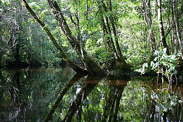 Riverside landscape at the Kamuni river, rain forest of Guayana, South America