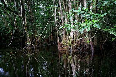 Riverside landscape, Kamuni river in the Guayana rainforest, South America
