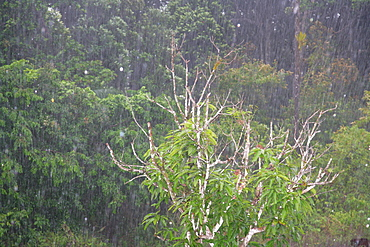 Tropical rains, Kaieteur Waterfalls, Potaro National Park, Guyana, South America