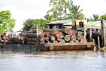 Loading exotic woods, Demerara River, Georgetown, Guyana, South America