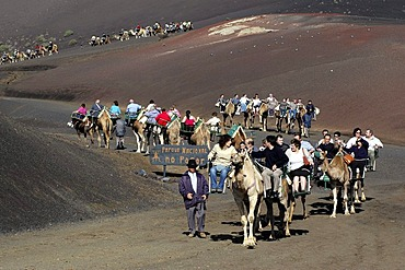 Camel riding, National Park Timanfaya, Lanzarote, Canary Islands, Spain