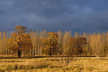 Dark thunderclouds looming over autumn landscape, colourful trees at the edge of a forest, Karower Teiche Nature Reserve, Berlin, Germany