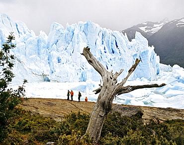 Perito Moreno Glacier, Campo de Hielo Sur, Andes, Patagonia, Argentina, South America