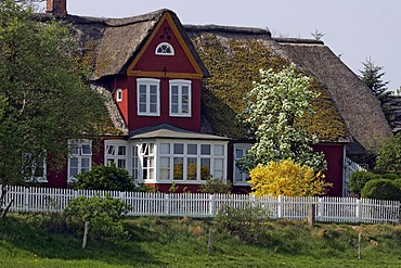 Old frisian house with thatched roof , Steenodde, Amrum, North Friesland, Schleswig-Holstein, Germany, Europe