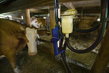 "Gstaad, CHE, ""Hintere Walig"", milking machine"