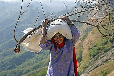 Indo-German-Changar-Eco-Development-Project, Ms Jalang with firewood and rice on the project area, Palampur, Himachal Pradesh, India