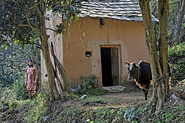 Indo-German-Changar-Eco-Development-Project, Gardiara at her house near Dhandol, Palampur, Himachal Pradesh, India