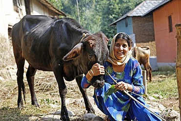 Indo-German-Changar-Eco-Development-Project, Annu Methe showing her cow in Gadjara, Palampur, Himachal Pradesh, India