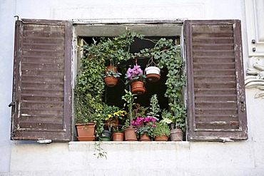 ITA, Italy, Rome : Window, flowers.  