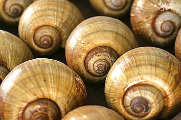 Snail shells as decoration. |