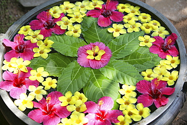 Floral arrangement floating in water, Somatheeram Ayurveda Resort, traditional Ayurvedic medicine spa resort, Trivandrum, Kerala, India, Asia