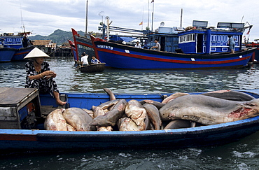 Fishing harbour on the Song Cai River, Nha Trang, Khanh Hoa Province, South Central Coast, Vietnam, Asia