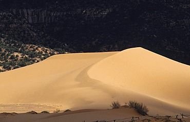 USA, United States of America, Utah: Coral Pink Sand Dunes State Park.