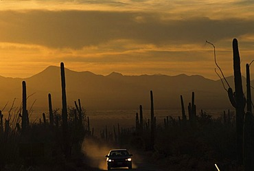 USA, United States of America, Arizona: Saguaro National Park, near Tucson, dirtroad at sunset.