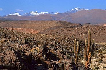 CHL, Chile, Atacama Desert.