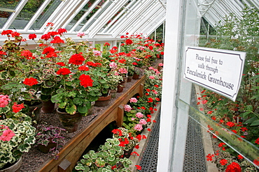 Greenhouse, The Lost Gardens of Heligan, Pentewan, St. Austell, Cornwall, Great Britain