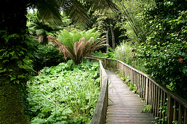 Bridge through the jungle, The Lost Gardens of Heligan, Pentewan, St. Austell, Cornwall, Great Britain