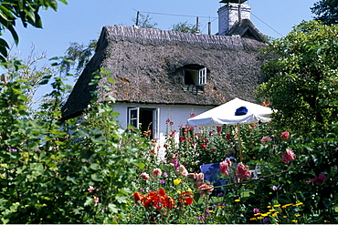 Thatched, thatch-roof house, Sieseby, Schlei, Schleswig-Holstein, Germany, Europe
