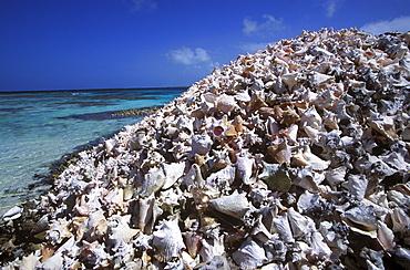 Seashell hill, fishermen's waste on Cayo Crasqui Island, Islas Los Roques, Venezuela, Caribbean