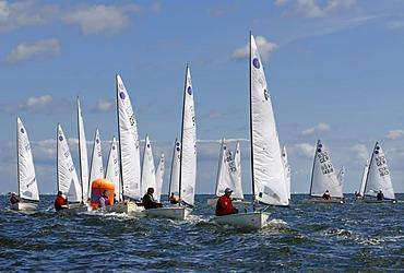 Sailing boats competing in a regatta on Schilksee, Kiel Week 2008, Kiel, Schleswig-Holstein, Germany, Europe