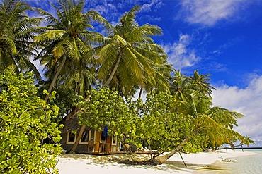Bungalow on Vilureef Resort, Maledives.