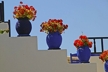 Red flowers in blue flowerpots, staircase of the tavern Oromedon, Cos , Dodecanese, Greece