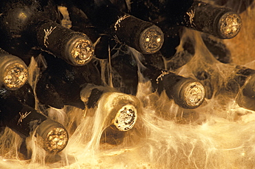 Wine bottles stored on a wine rack surrounded by mould in a wine cellar, Ede Tiffan Winery, Villany, Hungary