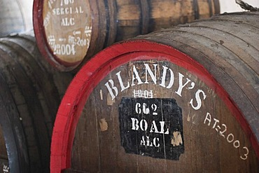 Wine casks in wine cellar - Madeira Wine Company - Funchal - Madeira