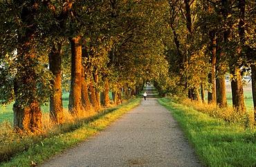 Evening light avenue in Geltendorf Upper Bavaria Germany