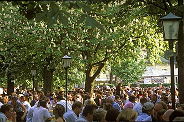 Beer garden Chinese Tower in English Garden , blooming chestnut trees , Munich , Bavaria Germany