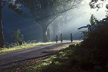 Morning mood in Ranomafana, Madagascar