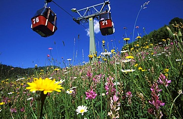Flowers in meadow, teleferic, Fiss, Tyrol, Austria