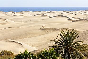 Sand dunes of Maspalomas, Playa del Ingles, Gran Canaria, Spain