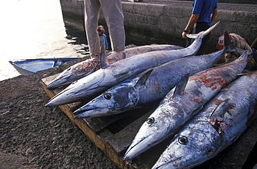 Frsh tuna, tunas, La Restinga, El Hierro, Canary Islands, Spain