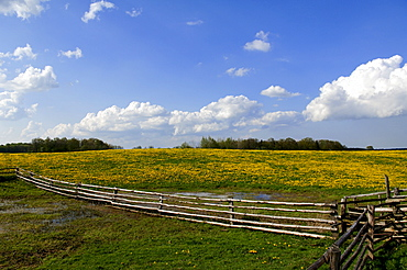 Landscape with blooming meadow, sky with clouds, Roegnitz, Mecklenburg-Western Pomerania, Germany, Europe