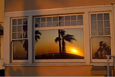 Palms, Venice Beach, Santa Monica, Los Angeles, California, USA