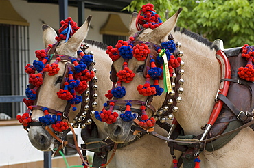Horses decorated for a Pentecost pilgrimage in El Rocio, Andalusia, Spain, Europe