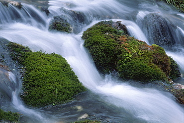 Moss-covered stones in Johannesbach stream, North Tirol, Austria, Europe