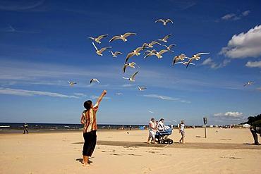Small boy feeding flying seagulls on Jurmala Beach, Latvia, Baltic Countries
