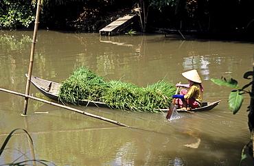 Heavily-laden canoe, woman transporting river grasses, Mekong Delta, Vietnam, Asia