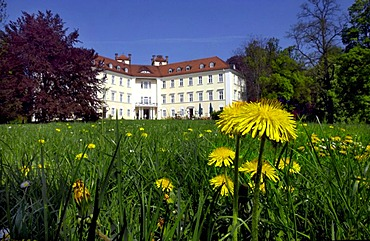 Dandelions at Lubbenau Castle