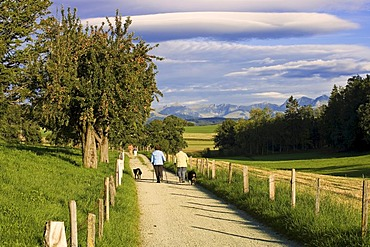 Elderly people walk on a country lane, canton of Fribourg, Switzerland