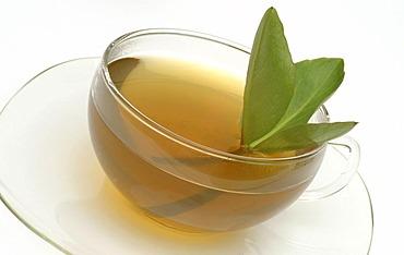 Herb tea made of Backbean, Buckbean, Marsh trefoil, Bogbean, Buckbean, tea, Menyanthes trifoliata